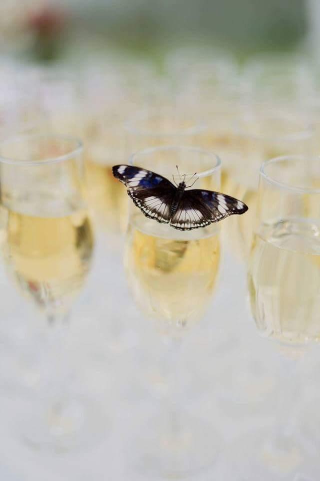 tropinis drugelis ant šampano taurės