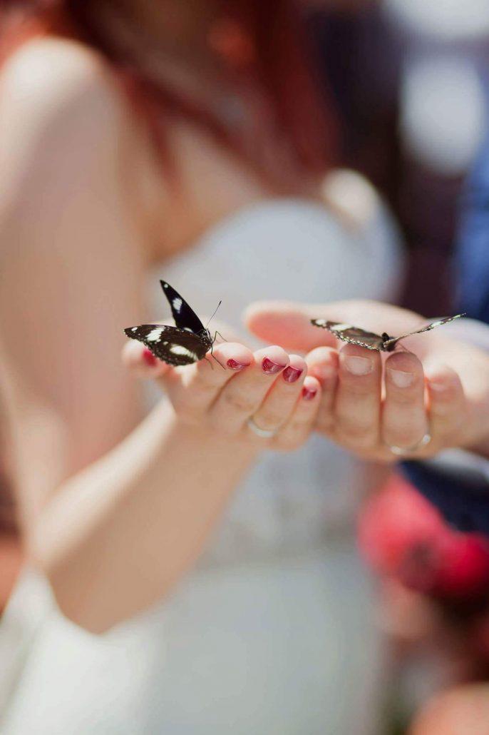 Tropiniai drugeliai šventėms