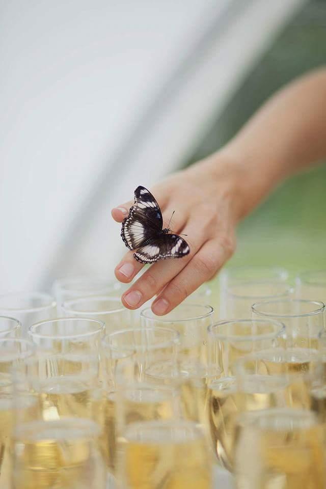 tropinis drugelis ant moters rankos